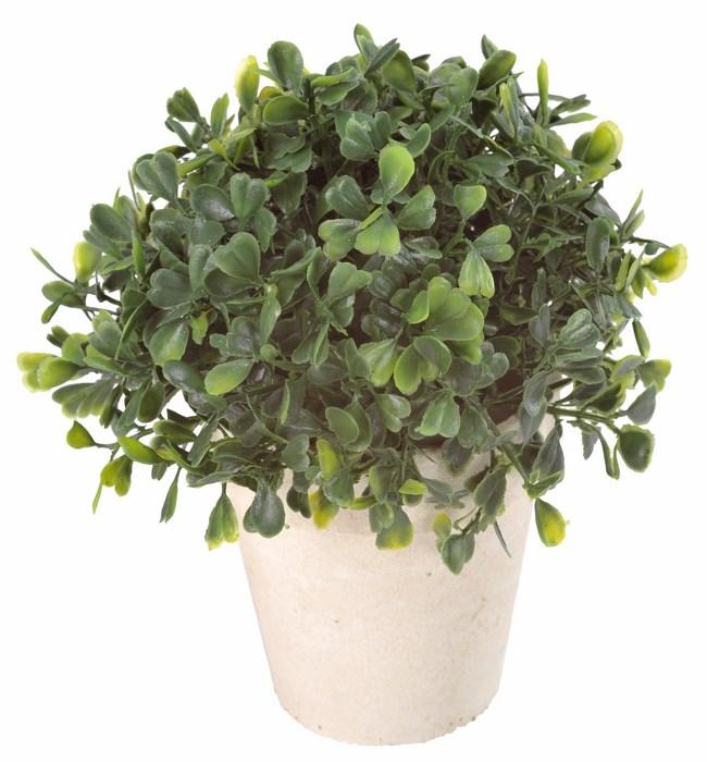 santex 3203 0 plante artificielle petit pot de buis ebay. Black Bedroom Furniture Sets. Home Design Ideas